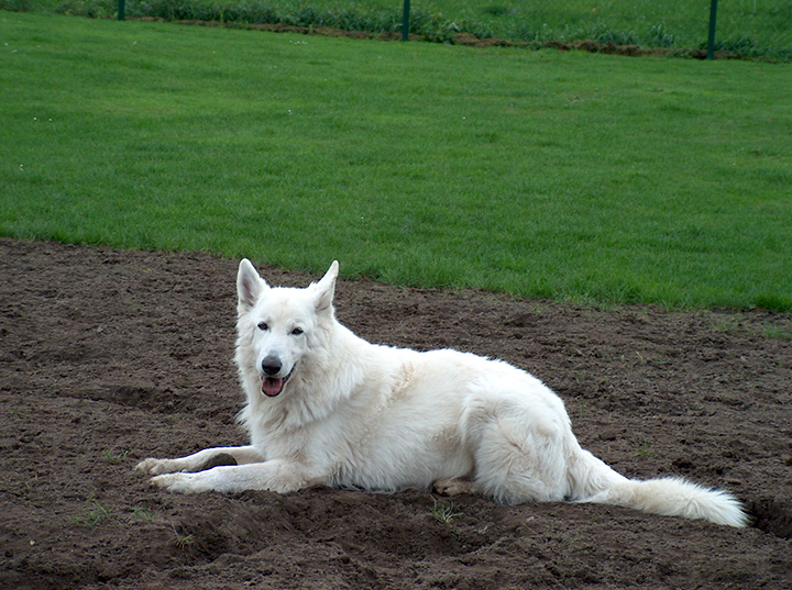 Xanto from The Silver Wolfsfarm