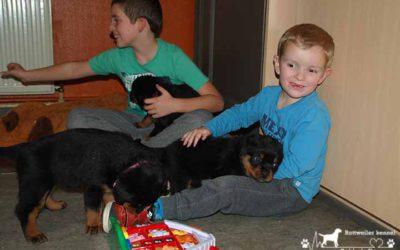 Puppies van Niki & River worden vandaag 5 weekjes.